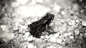 Photo Filter - #PhotoEffect #PhotoFilter #PhotographyFilter #terrestrial #organism #fauna #toad #amphibian #dark