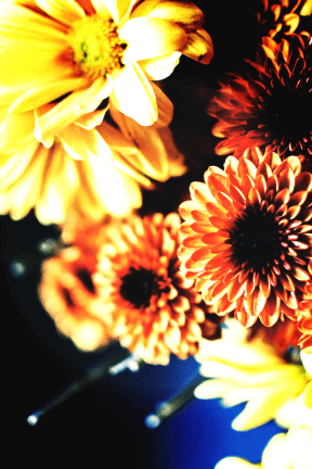 Photo Filter - #PhotoEffect #PhotoFilter #PhotographyFilter #chrysanths #dahlias #computer #gerbera #flower #orange #yellow #flowers #daisy #family