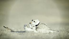 Photo Filter - #PhotoEffect #PhotoFilter #PhotographyFilter #ecoregion #wing #bird #sand #feather #lark #wildlife