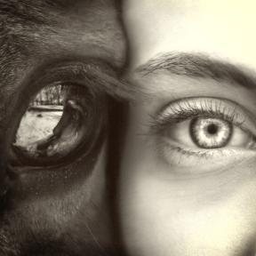 Photo Filter - #PhotoEffect #PhotoFilter #PhotographyFilter #organ #up #eye #human #eyebrow #ophthalmology #nose #eyelash