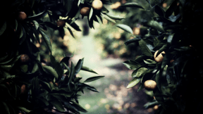 Photo Filter - #PhotoEffect #PhotoFilter #PhotographyFilter #tangerine #tree #produce #orange #plant #fruit #evergreen #branch #citrus