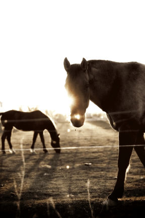 Photo Filter - #PhotoEffect #PhotoFilter #PhotographyFilter #ranch #mammal #mare #horse #animal #pasture #stallion #pack