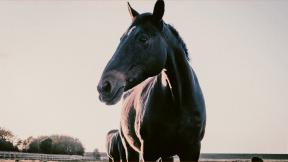 Photo Filter - #PhotoEffect #PhotoFilter #PhotographyFilter #mane #livestock #pasture #mammal #horse #like #pack #stallion