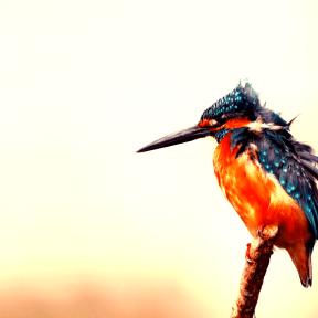 Photo Filter - #PhotoEffect #PhotoFilter #PhotographyFilter #feather #beak #bird #close #wallpaper #fauna #computer #up