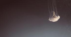 Photo Filter - #PhotoEffect #PhotoFilter #PhotographyFilter #organism #jellyfish #invertebrate #atmosphere #wallpaper #cnidaria #marine #computer #invertebrates