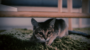 Photo Filter - #PhotoEffect #PhotoFilter #PhotographyFilter #whiskers #sized #domestic #kitten #cat #cats #to