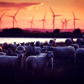 Photo Filter - #PhotoEffect #PhotoFilter #PhotographyFilter #tundra #herd #evening #sky #livestock