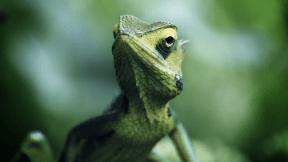 Photo Filter - #PhotoEffect #PhotoFilter #PhotographyFilter #lizard #wildlife #amphibian #animal #dactyloidae #reptile #chameleon #lacertidae