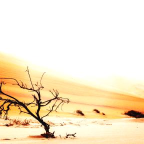 Photo Filter - #PhotoEffect #PhotoFilter #PhotographyFilter #sky #desert #sahara #landform #sand #ecoregion #ecosystem #dune #landscape