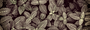 Photo Filter - #PhotoEffect #PhotoFilter #PhotographyFilter #green #conspicuous #plant #groundcover #pattern #veins
