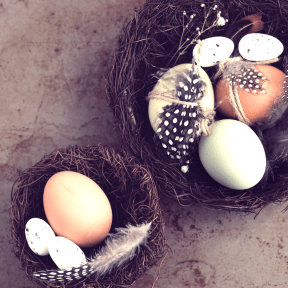 Photo Filter - #PhotoEffect #PhotoFilter #PhotographyFilter #small #easter #nest #eggs #egg #A #Easter #each