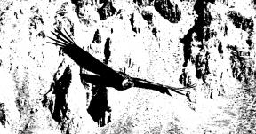 Photo Filter - #PhotoEffect #PhotoFilter #PhotographyFilter #fauna #beak #wildlife #condor #prey #of #bird #vulture