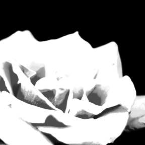Photo Filter - #PhotoEffect #PhotoFilter #PhotographyFilter #roses #rose #flower #centifolia #rosa