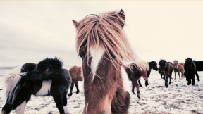 Photo Filter - #PhotoEffect #PhotoFilter #PhotographyFilter #herd #horse #like #mustang #pony