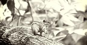 Photo Filter - #PhotoEffect #PhotoFilter #PhotographyFilter #fauna #mammal #animal #rodent #terrestrial #squirrel #organism #tree #fox