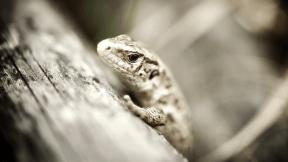 Photo Filter - #PhotoEffect #PhotoFilter #PhotographyFilter #reptile #scaled #amphibian #terrestrial #animal #lacertidae #fauna #lizard #organism