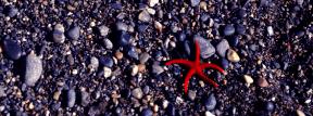 Photo Filter - #PhotoEffect #PhotoFilter #PhotographyFilter #gravel #rock #source #beach #animal #soil #organism #pebble #foods