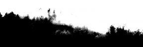 Photo Filter - #PhotoEffect #PhotoFilter #PhotographyFilter #forest #biome #reserve #tree #morning #grass #fog #nature