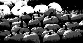 Photo Filter - #PhotoEffect #PhotoFilter #PhotographyFilter #produce #calabaza #squash #cucurbita #cucumber #pumpkin #local #winter #and #melon