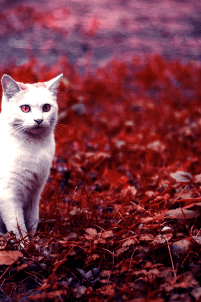 Photo Filter - #PhotoEffect #PhotoFilter #PhotographyFilter #cat #whiskers #wildlife #like #small #fauna