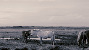 Photo Filter - #PhotoEffect #PhotoFilter #PhotographyFilter #ponies #horse #muddy #mustang #A #like #group #under