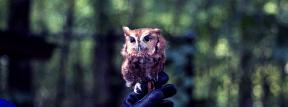 Photo Filter - #PhotoEffect #PhotoFilter #PhotographyFilter #owl #fauna #tree #animal #wildlife