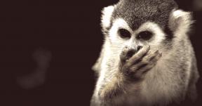 Photo Filter - #PhotoEffect #PhotoFilter #PhotographyFilter #organism #squirrel #new #monkey #animal #fauna