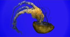 Photo Filter - #PhotoEffect #PhotoFilter #PhotographyFilter #invertebrates #marine #mythical #invertebrate #jaw #fish