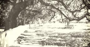 Photo Filter - #PhotoEffect #PhotoFilter #PhotographyFilter #tree #plant #trail #spring #landscape #path #plantation #woodland