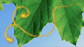 Photo Overlay Design - #PhotoOverlay #PhotoFilter #Photography #font #leafe #nature #contrast #sun #background #OverlayImage #foliage #leaf #symbol