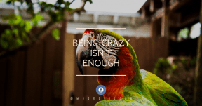 Quote Card Design - #Quote #Saying #Wording #sky #parrot #symbol #fauna #line #brand #macaw #parakeet #tree
