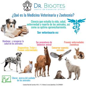 veterinaria es
