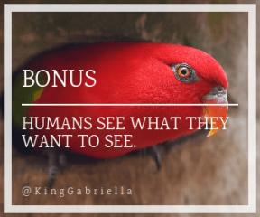 Wording Banner Ad - #Saying #Quote #Wording #perico #organism #parakeet #fauna #bird #lovebird #beak #lorikeet #macaw