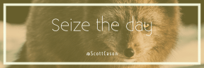 Wording Cover Layout - #Saying #Quote #Wording #fur #red #fox #terrestrial #snout #dog #arctic #animal #like #fauna
