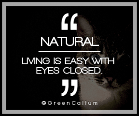 Wording Banner Ad - #Saying #Quote #Wording #background #close #cat's #tabby #blue-eyed #whiskers #mammal #cat #fauna