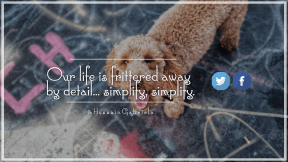 Wording Cover Layout - #Saying #Quote #Wording #blue #wallpaper #cockapoo #font #dog #brand #product #spanish