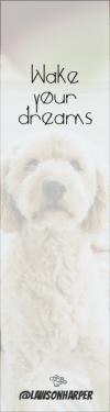 Wording Banner Ad - #Saying #Quote #Wording #dog #media #cockapoo #poodle #like #social #goldendoodle #crossbreeds