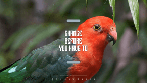 Wording Cover Layout - #Saying #Quote #Wording #fauna #app #lorikeet #horizontal #macaw #parrot
