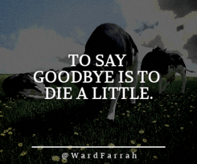 Wording Banner Ad - #Saying #Quote #Wording #lawn #dog #field #mammal #plant #grassland