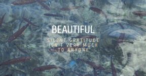 Quote Card Design - #Quote #Saying #Wording #symbol #product #underwater #blue #text #organism #fish #water