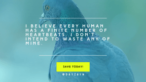 Call to Action Quote Header - #CallToAction #Saying #Quote #Wording #beak #doves #rectangle #wildlife #and