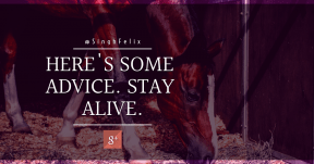 Quote Card Design - #Quote #Saying #Wording #horse #product #mammal #symbol #mare #computer #like #livestock