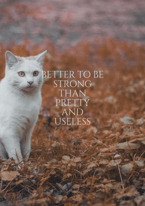 Print Quote Design - #Wording #Saying #Quote #to #cat #cats #sized #mammal #whiskers #wildlife