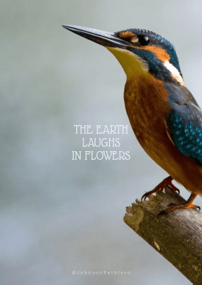 Print Quote Design - #Wording #Saying #Quote #beak #wildlife #fauna #bird #coraciiformes