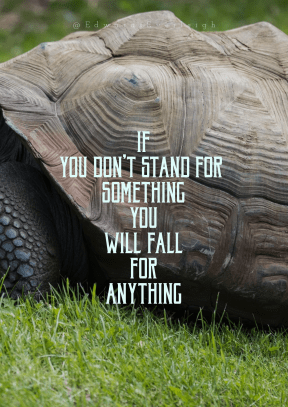 Print Quote Design - #Wording #Saying #Quote #common #animal #grass #reptile #fauna #emydidae #organism #snapping #chelydridae #tortoise