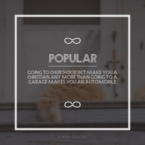 Square design layout - #Saying #Quote #Wording #curled #to #summertime #small #cat #ginger #kitten