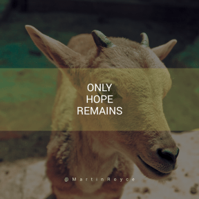 Square design layout - #Saying #Quote #Wording #wildlife #horn #goats #snout #antelope #goat