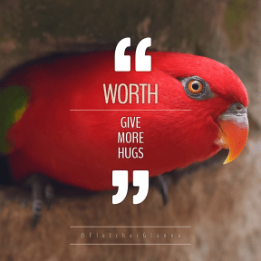 Square design layout - #Saying #Quote #Wording #marks #parrot #bird #quote #quotation #basic #parakeet