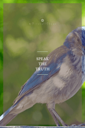 Poster Saying Layout - #Quote #Wording #Saying #beak #finch #background #bird #jay #retro #organism #digg #badge #gracious