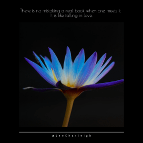 Quote image - #Quote #Wording #Saying #black #plant #shapes #daisy #still